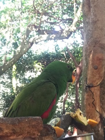 Bird eating at Wildlife Habitat Port Douglas