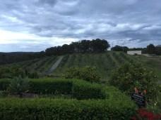 Olivigna pretty views