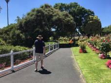 David walking roses