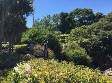 garden David looking
