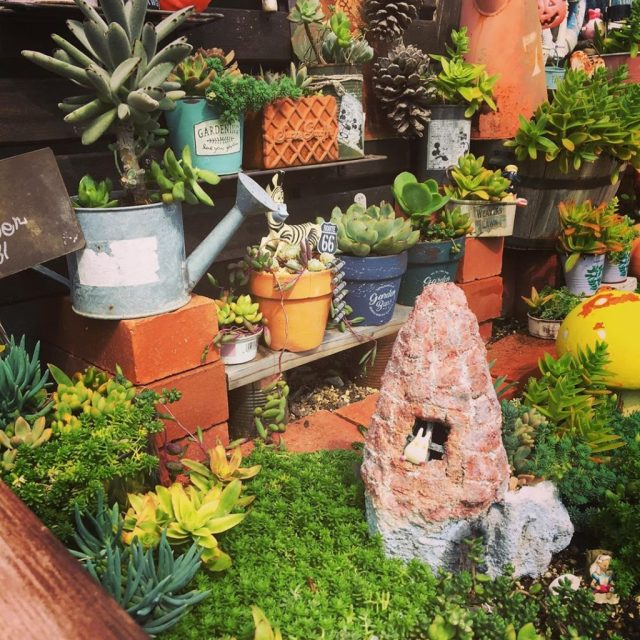 The Best Succulents For Your Fairy Garden