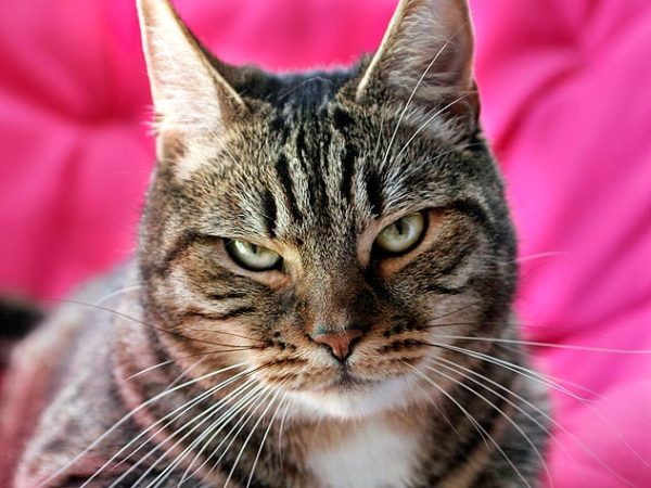 Bringing Home A New Cat   Petfinder