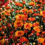 Fall Gardening Tips For Southwest Mo