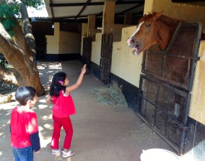 Embassy Riding School, the stable