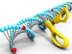 CRISPRScissorsSolcansergiuDreamstime