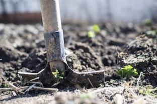 jardinage-désherber