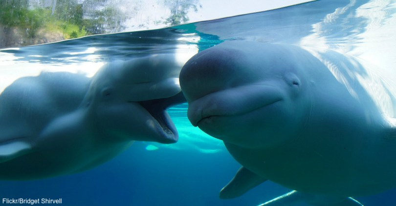 Image result for dolphin sleeping with one eye open