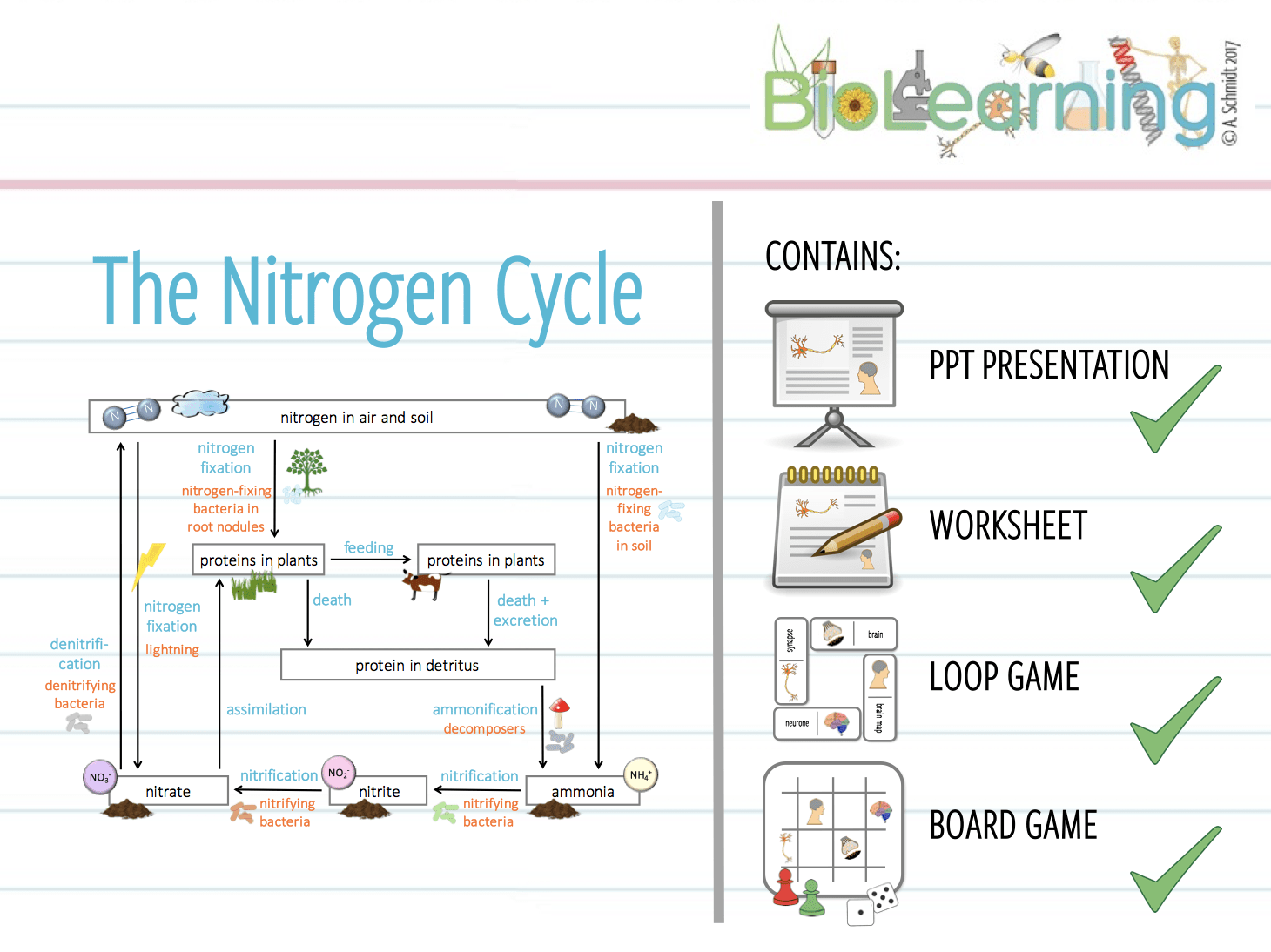 Nitrogen Cycle Worksheet Microbe