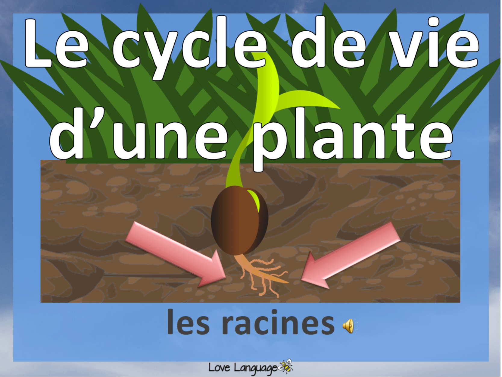 Life Cycle Of A Plant In French Bundle