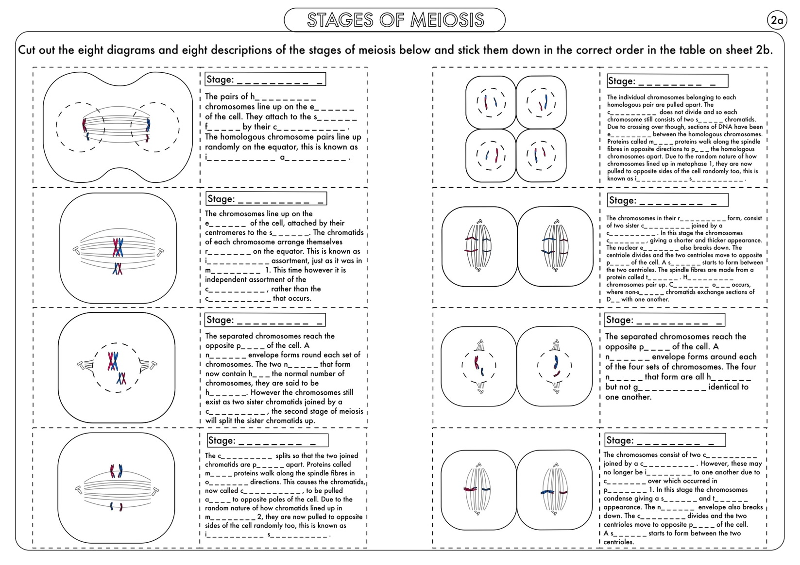 Worksheet Meiosis And Mitosis Worksheet Grass Fedjp