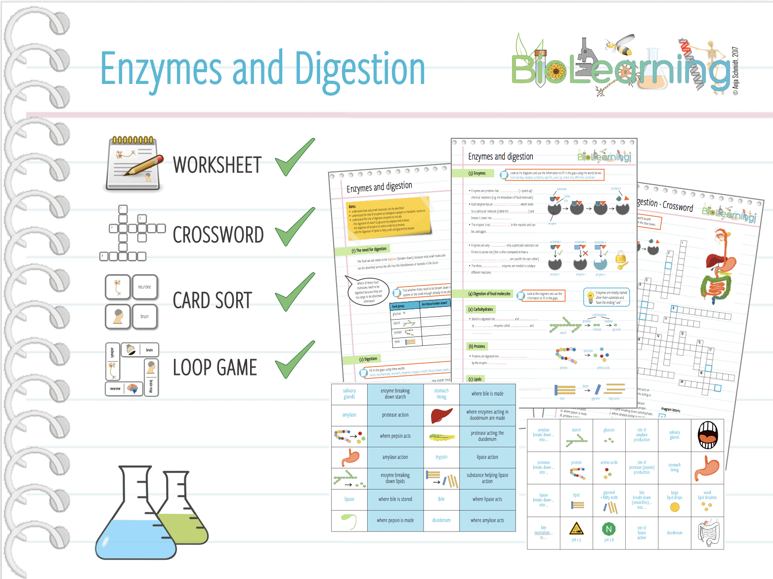 Enzymes And Digestion X4