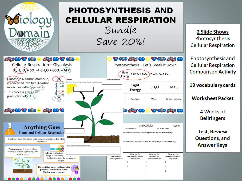 Photosynthesis And Cellular Respiration Bundle By