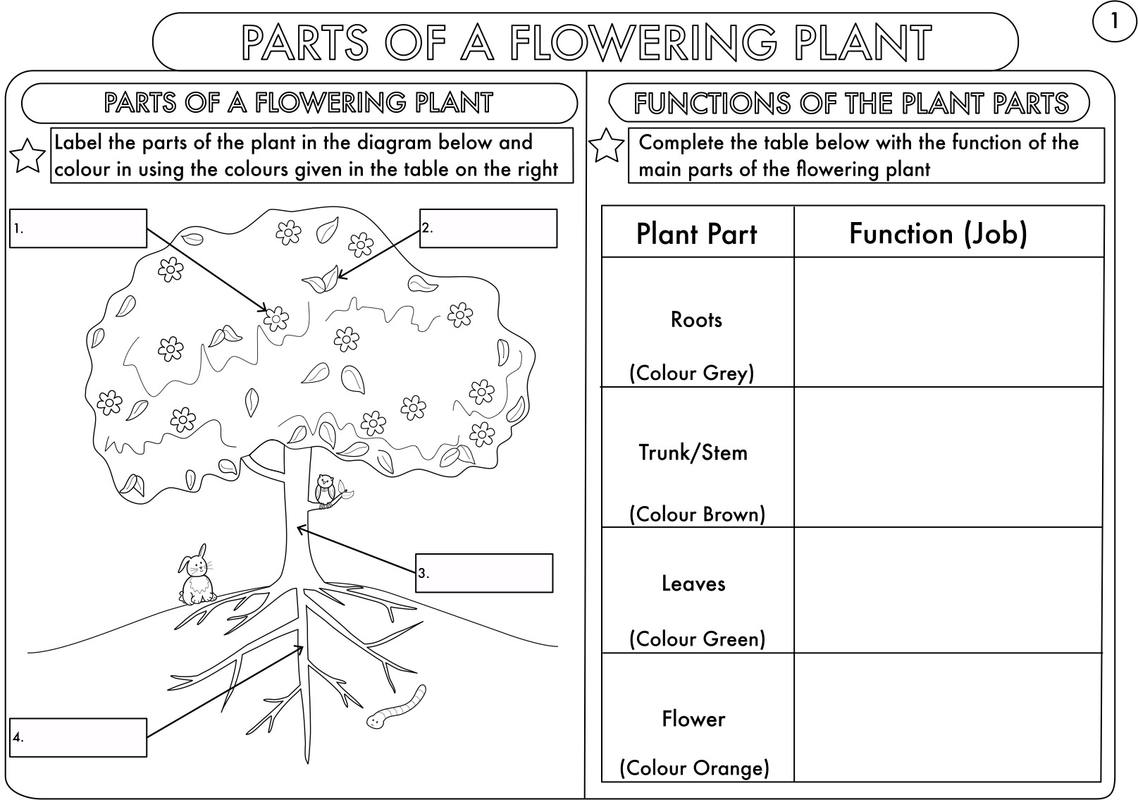 Xylem And Phloem Diagram Worksheet