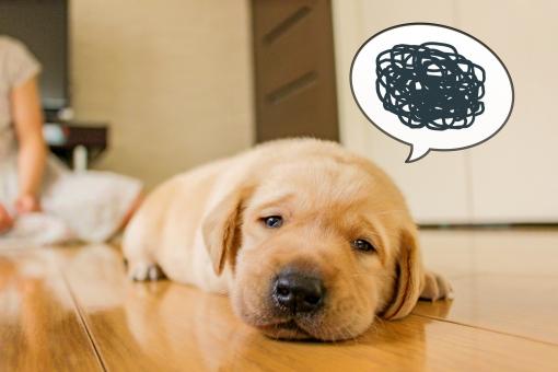 「犬 悩む 写真 フリー」の画像検索結果