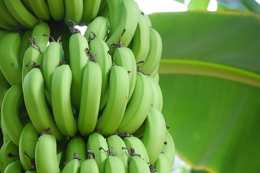 「青い バナナ フリー」の画像検索結果