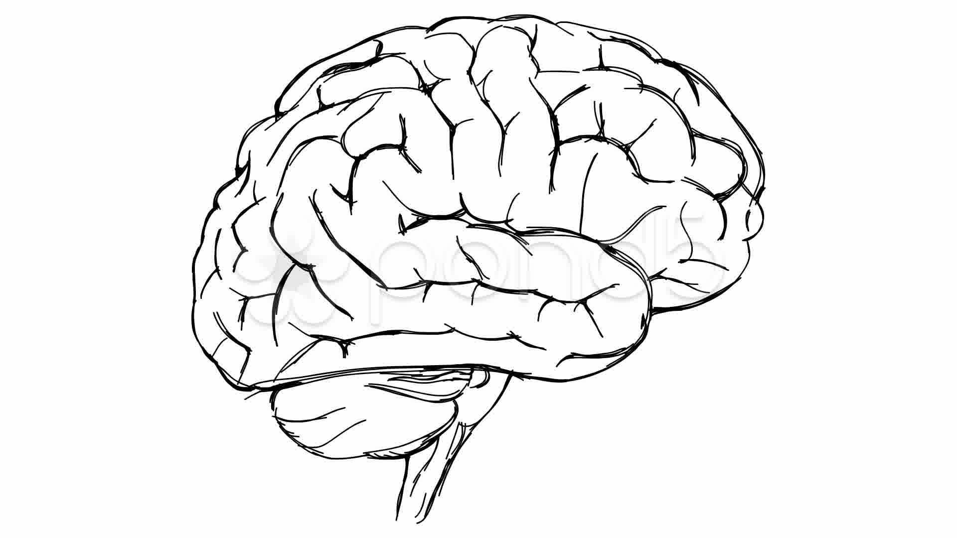 Brain Sketch Stock Video