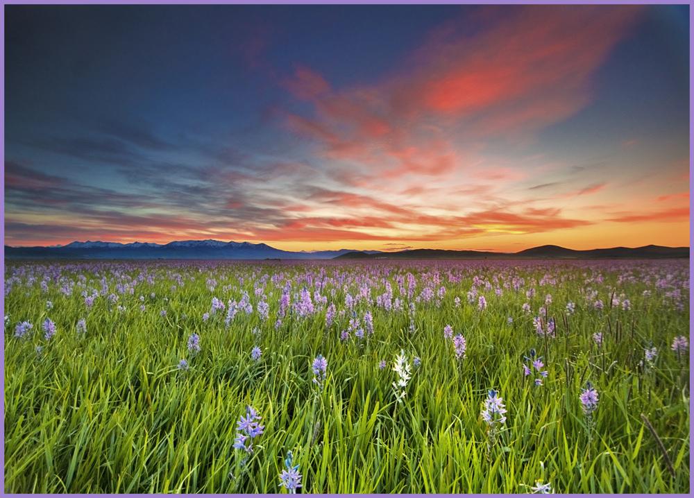 Sunrise Over Camas Prairie, Idaho by Charles Knowles
