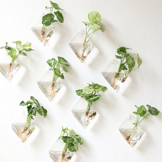 houseplants diamond vases forest homes