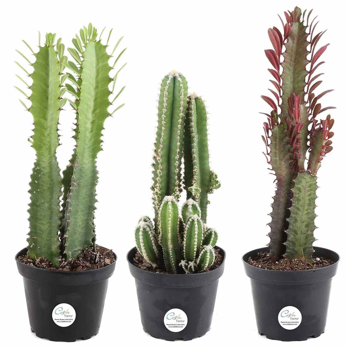houseplants, indoor plants, plants, cactus, cacti