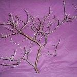 6 Pk 12 Tall Natural Manzanita Branch Centerpiece Diy Wedding Anniversary Fresh Sold By Shirley S Woodworks On Storenvy