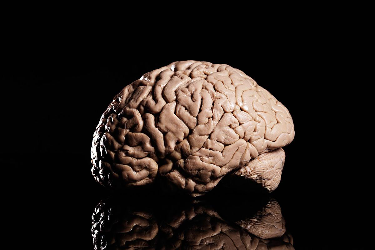 Brain S Reward System Earns Researchers 1 Million Prize