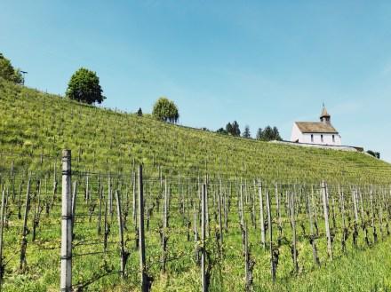 vineyards Staatskellerei Zurich