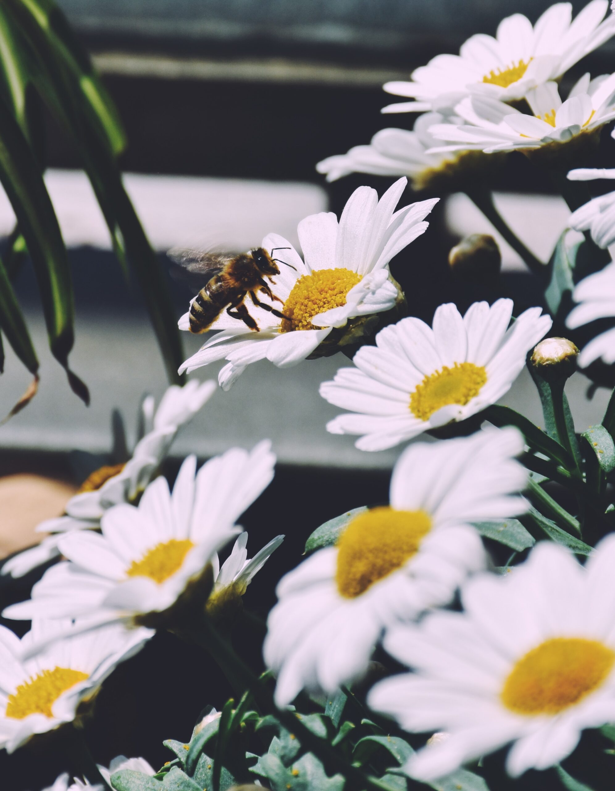 Bees in the urban garden