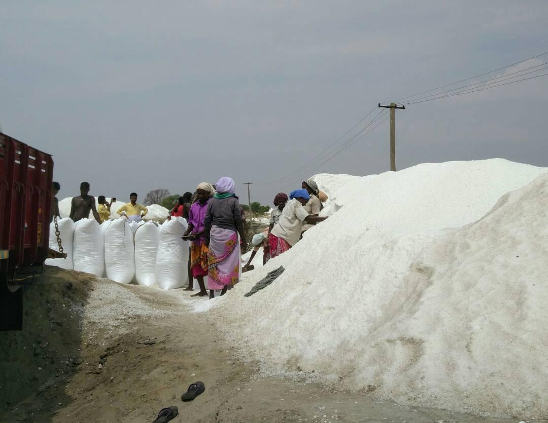 Worker at the salt plant in Alamparai. Photo credit: Vinita Govindarajan.