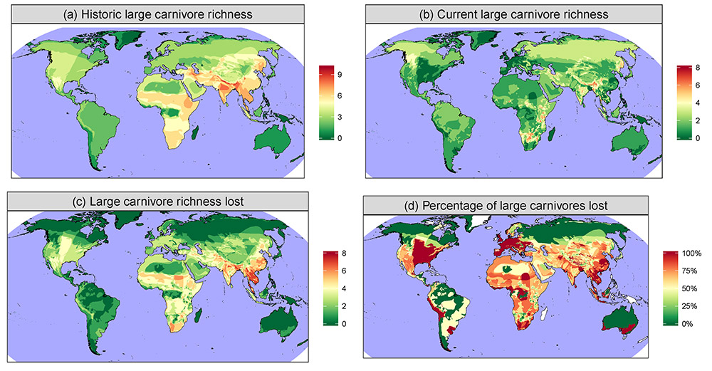 Composite range contractions maps based on all 25 large carnivores. Variables shown are (a) historic species richness, (b) current species richness, (c) their difference (i.e. lost species richness) and (d) the percentage of species lost.