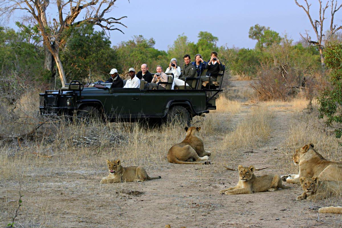 Resultado de imagem para safaria na áfrica