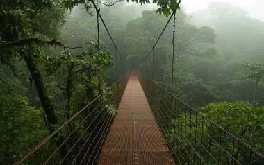A hanging bridge in the mists of the Monteverde Cloud Forest.