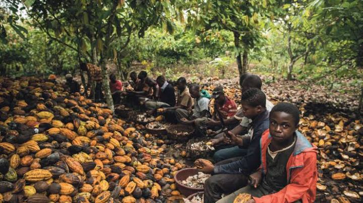 Children in Western Africa working on the Cocoa farms