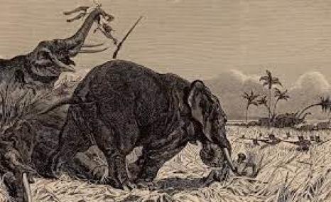 The Dahomey Amazons were initially elephant hunters.