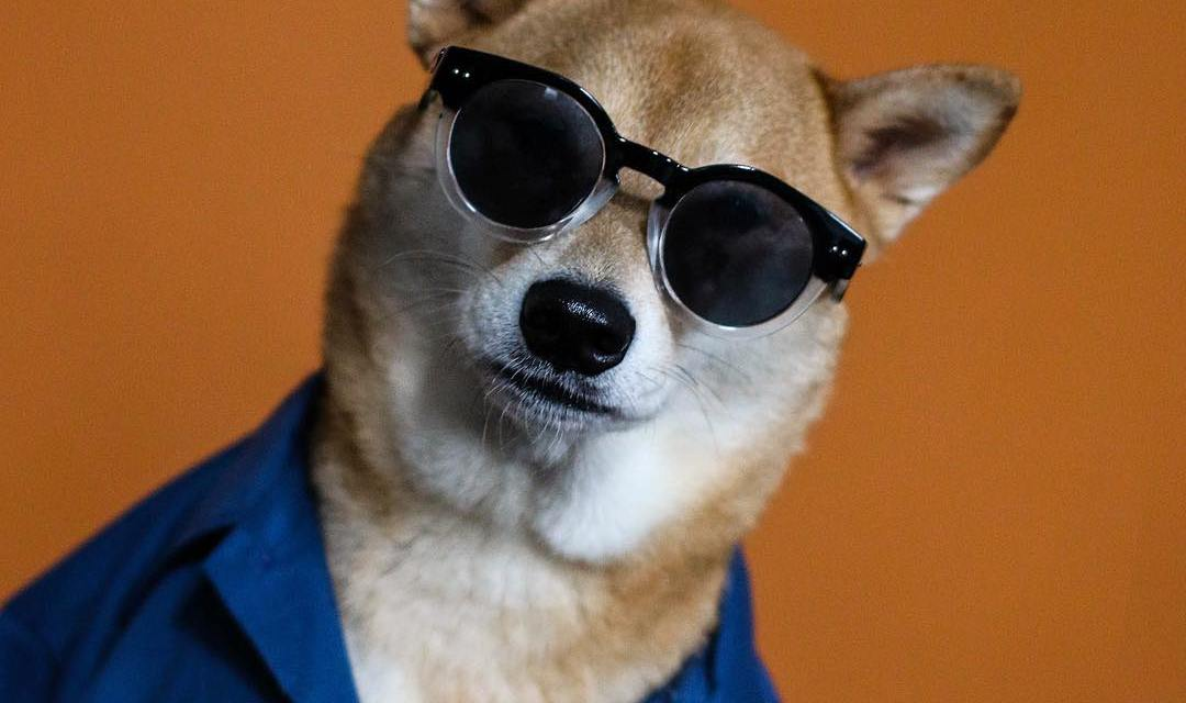 15 perfis de cachorros estilosos para seguir já!