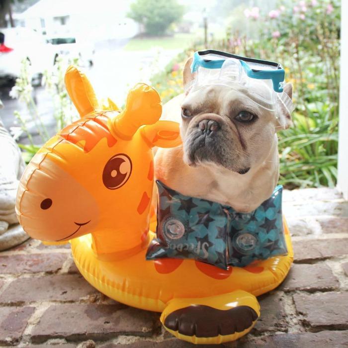 3bulldogges-doghero