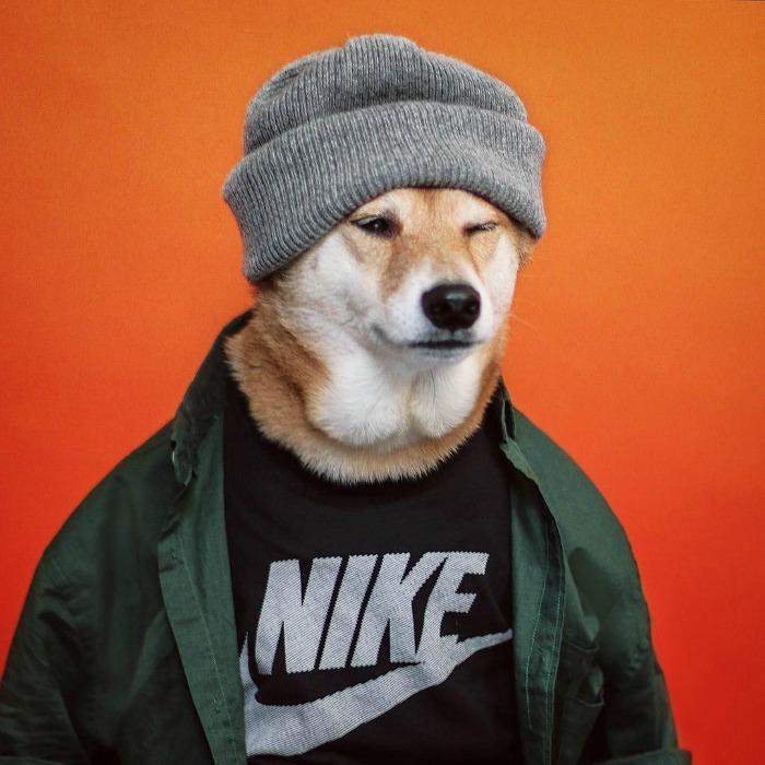 mensweardog-doghero