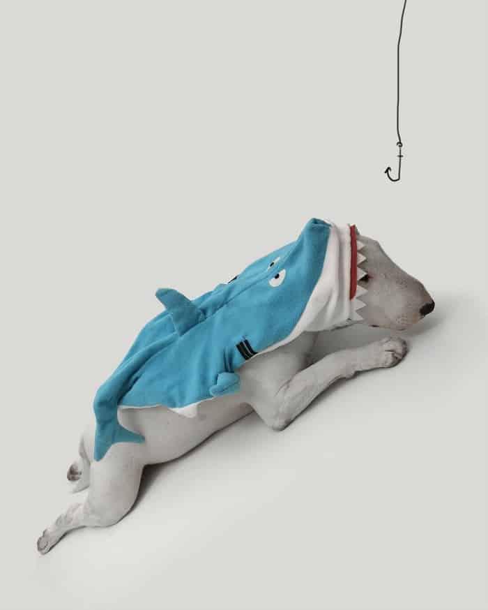 rafaelmantesso-doghero