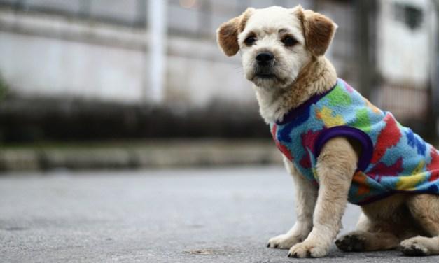 8 dicas para cuidar de um cachorro idoso