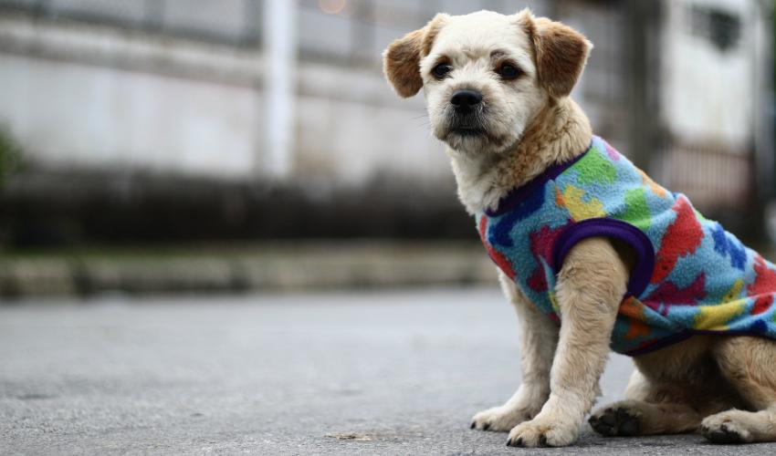 8 dicas para cuidar de cães idosos