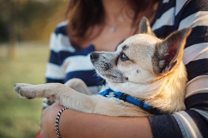 Principais cuidados para hospedar cães idosos