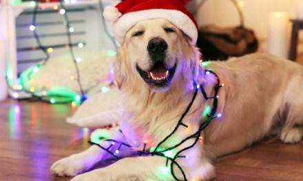 Cuidados com os cães durante as festas de fim de ano