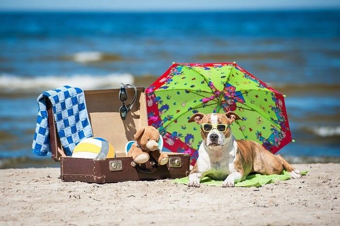 13 dicas para cuidar de cães no verão