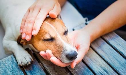 Pulgas e carrapatos: como blindar o cãozinho e a casa dos parasitas