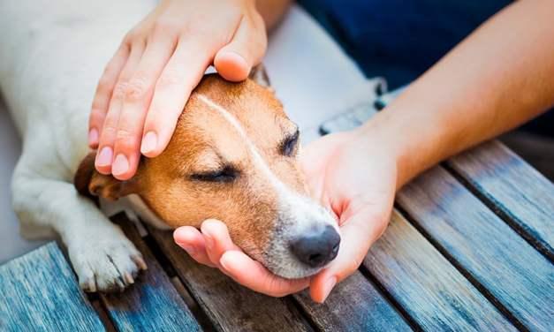 Como tirar carrapato de cachorro de maneira efetiva