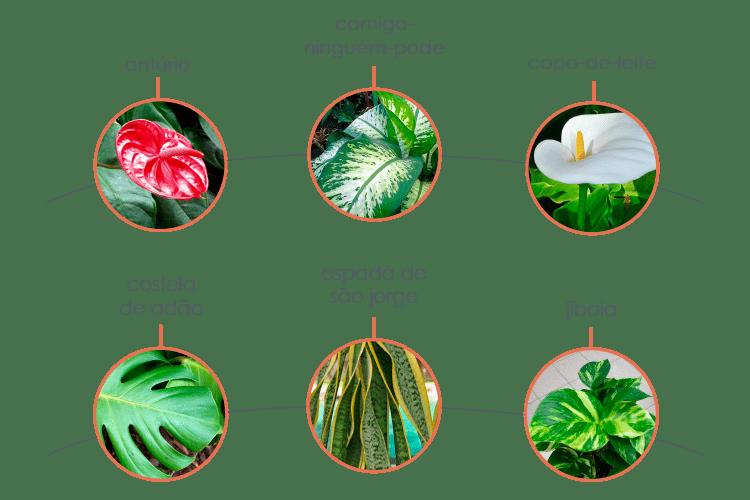 plantas-toxicas-para-caes-1