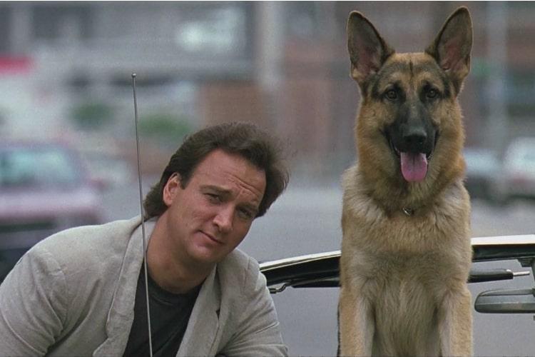 filmes-de-cachorro-2