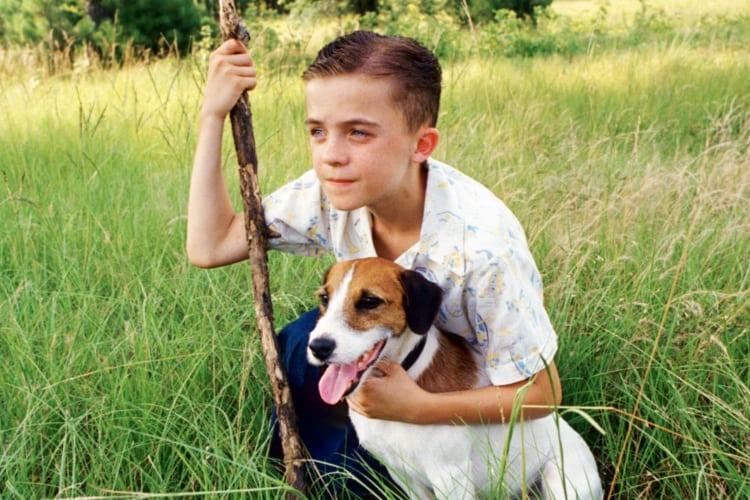 filmes-de-cachorro-8