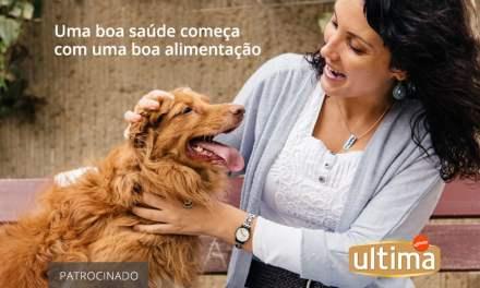 Alimento superpremium para cães: qual a diferença?