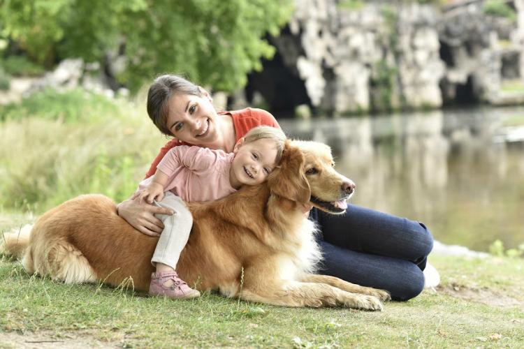 A família vai aumentar? Veja dicas para integrar crianças, bebês e cães