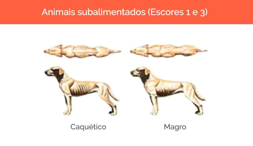 cachorro-gordo-1